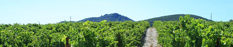 Find Visit Domaine Cinq Vents Wine Saint-Saturnin de Lucian